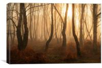 Denny Wood The New Forest Hampshire, Canvas Print
