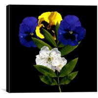 Pansy and Cherry Blossom, Canvas Print
