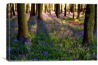 Woodland Carpet, Canvas Print
