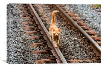 Cat On A Hot Tin Track, Canvas Print