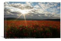 Early Morning Sun over Field of Poppies, Canvas Print