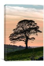 Lone Tree Silhouette at Dusk, Canvas Print