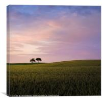 Two trees (evening), Canvas Print