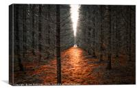 Dead forest, Canvas Print