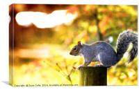 A Time To Squirrel, Canvas Print