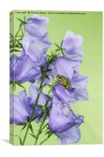 Green Tree Frog on Flowers, Canvas Print