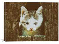 Small Baby Kitty Cat Portrait, Canvas Print