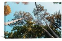 Autumn Forest Trees On Blue Sky Background, Canvas Print