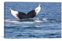 Tail of Whale, Cape Cod, Canvas Print