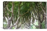 Magical forest, Northern Ireland, Canvas Print