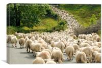 Sheep on the move Brecon Beacons National Park, Canvas Print
