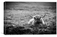 Highland Cow on Skye in Black and White, Canvas Print