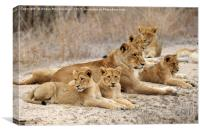 Lioness with cubs, Canvas Print
