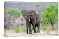 Lone bull elephant drinking at waterhole, Canvas Print