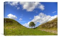 Sycamore Gap on Hadrian's Wall, Canvas Print