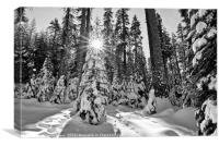 Winter Wonderland of Badger Pass in Yosemite Natio, Canvas Print