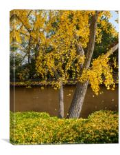 The beautiful fall colors of the Japanese Gardens, Canvas Print
