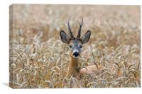 Roe Deer in Wheat Field, Canvas Print