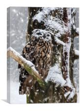 Eagle Owl in Snowstorm, Canvas Print