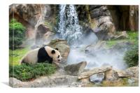 Giant Panda in the Mist, Canvas Print
