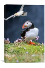 Atlantic Puffin and Flying Gannet, Canvas Print