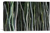 Abstract Tree Trunks, Canvas Print