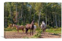 Horses in a forest clearing, Canvas Print