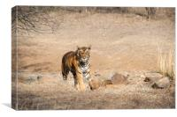 Tiger in the light, Canvas Print