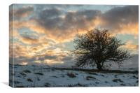 Lonely Tree sunrise in winter, Canvas Print
