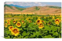 Sunflower Valley, Canvas Print
