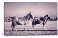 Ponies in the New Forest, Canvas Print