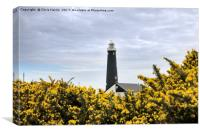 The Old Lighthouse, Dungeness, Canvas Print
