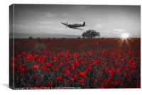 Spitfire over a field of poppies., Canvas Print