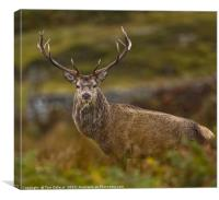 Spotted me!, Canvas Print