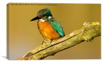 Eurasian Kingfisher, Canvas Print