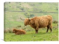Highland cow and calf in the Lake District, Canvas Print