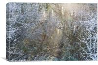 Frosty Winter Forest, Canvas Print