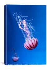 Pink Jellyfish in deep blue water , Canvas Print