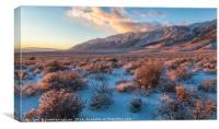 Winter In The Desert, Canvas Print