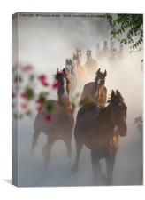 Horse Herd Coming Home, Canvas Print