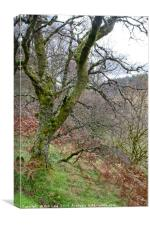 Ettrick Valley Woodland, Canvas Print