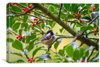 Coal Tit (Periparus ater) In A Holly Tree, Canvas Print