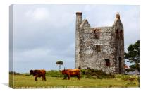 Highland Cattle and Tin Mine Bodmin Moor Cornwall, Canvas Print