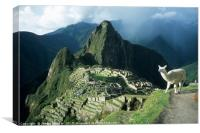 Llama Enjoying the View at Machu Picchu Peru, Canvas Print