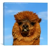 Brown Alpaca Portrait, Canvas Print
