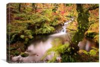 Venford Brook, Canvas Print