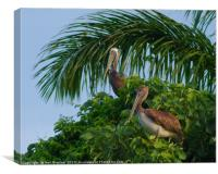 Mr and Mrs Pelican, Canvas Print