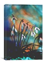 snowdrop in mountain, Canvas Print