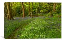 English Woodland in Spring., Canvas Print