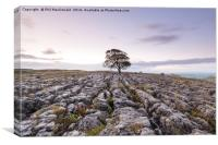The Lonely Malham Ash at Dawn, Canvas Print
